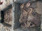 Kostry oslů, objeveny ve starověkém pohřebišti