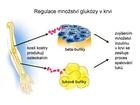 Regulace výměny cukru v organismu kostní tkání