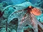 Mladý jedinec T. danae, vylovený ve vodách Tichého oceánu. Člověk by neřekl, že se v dospělosti z tak milého tvora stane krvelačná bestie.