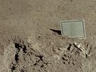 Padlý Astronaut je 8,5 cm vysoká hliníková soška astronauta ve skafandru. Je to jediné umělecké dílo nacházející se na Měsíci.
