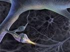 """Skupina mozkových elektrických senzorů (dendrit) uvnitř neokortikální vrstvy """"Modrého mozku"""""""