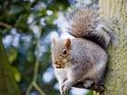 I když jsou veverky malé, vůbec to nejsou hloupá zvířátka