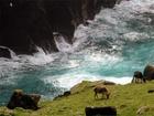 Druh ovcí, který se nejvíce přibližuje starověkým zástupcům tohoto druhu, našli vědci na vzdálených ostrovech u severo-východního pobřeží Skotska. Zdejší plemeno ovcí svou stavbou těla odpovídá starověkým nálezům.