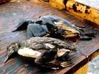 Obrovská nehoda tankeru způsobila vytvoření trvalé zóny ekologické katastrofy