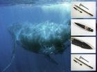 """Vpravo jsou rozloženy fragmenty výbušné """"harpuny"""", vytažené z velryby. Napravo, pro srovnání, svou konstrukcí podobný, jistě už nevybuchující granát z roku 1885. Dole: zvětšenina hrotu velrybářské zbraně, který byl nalezen ve velrybě"""