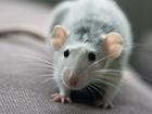 krysy nejen mohou spoléhat na jistotu zvoleného řešení, ale také ji využívat pro změnu následného chování