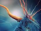 Stafylokok (z řec. staphyle, hrozen) je klinicky nejvýznamnější bakteriální rod čeledi Staphylococcaceae. Jsou to grampozitivní, nesporulující koky, ve světelném mikroskopu jsou buňky uspořádané do tvaru charakteristických hroznů. Rod zahrnuje 31 známých druhů bakterií, z nichž většina je nepatogenní a tvoří součást přirozené mikroflóry kůže a sliznic člověka i zvířat, vyskytují se také v půdě nebo v potravinách. Pro člověka jsou klinicky významné dva druhy, Staphylococcus aureus, neboli zlatý stafylokok, a Staphylococcus epidermidis.