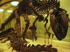 Tento nelétavý opeřenec žil v oblasti současné hranice Mongolska a Číny. Protože to bylo před 70-80 milióny let, tak tito tvorové neměli žádné problémy s pasovou a celní kontrolou.