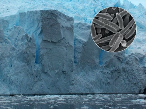 Antarktida a bakterie