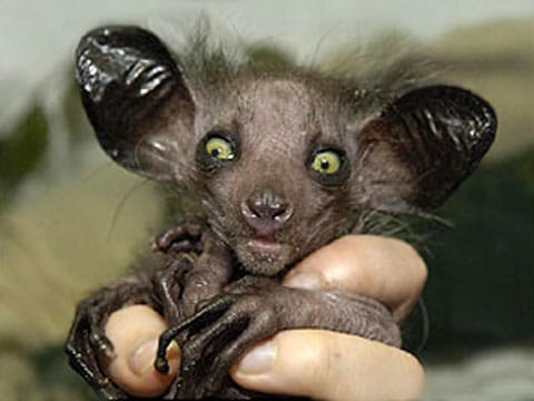Nejzvláštnější  zvířata  a tvorové světa