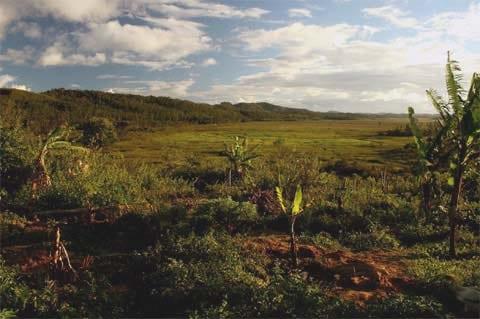 Bažiny Torotorofotsy (na fotografii) se na první pohled liší od bambusového lesa na jihu ostrova, kde žije dříve známá populace vzácných primátů.