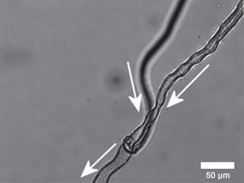 Během experimentů se vědcům podařilo vytvořit nejen trubičky složitého tvaru, ale také jejich rozvětvení (foto Nature Chemistry).
