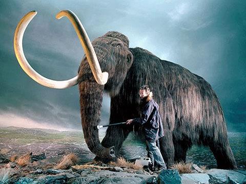 Byli mamuti severní vyvražděni stromy?