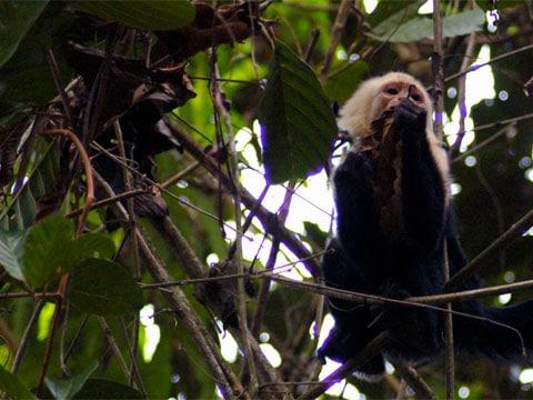 Dávní primáti očividně dokázali velice dobře rozeznávat obličeje ještě předtím, než se na planetě objevili lidé