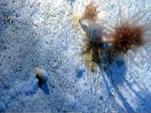 Jeden z organismů se podobá korálům pohárového tvaru
