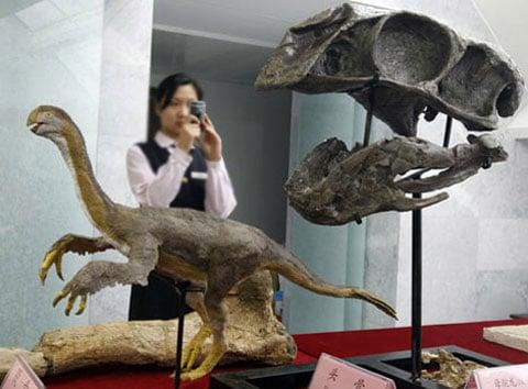 Lebka gigantoratora a  miniaturní rekonstrukce celého zvířete na výstavě, která probíhá tyto dny v Pekingu.