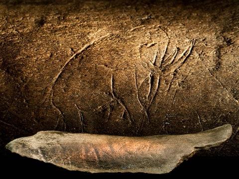 Mamut je vyhynulý rod z čeledi slonovitých a řádu chobotnatců. Mamuti tedy byli podobní dnešním slonům. Mamuti měli dlouhé zahnuté kly a severské druhy dlouhé chlupy. V době ledové obývali severní oblasti Evropy, Severní Ameriky a severní Asii.