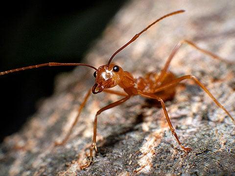 Mravencovití (Formicidae) jsou jednou z nejúspěšnějších skupin hmyzu v živočišné říši a jsou proto v mimořádném zájmu vědců – myrmekologů, ekologů, biosociologů. Tato úspěšnost je přikládána jejich sociálnímu způsobu života a specializaci.