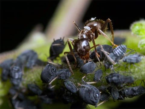 Mravencovití (Formicidae) jsou jednou z nejúspěšnějších skupin hmyzu v živočišné říši