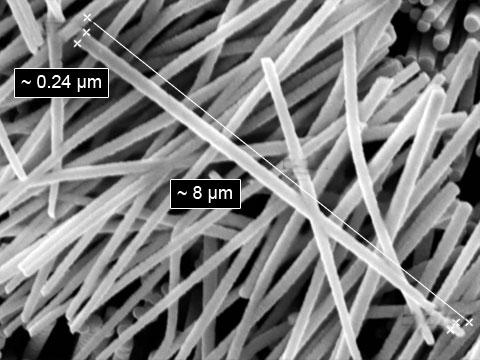 Nanonitě z niobičnanu draselného. Vědci je doporučují využívat na osvětlení viditelným světlem mikroskopických vzorků živých tkání.