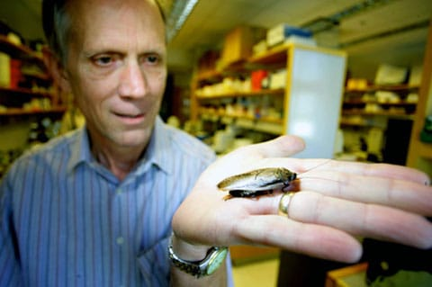 Page a samička L. maderae. Vědec vysvětlil, proč vybral pro své pokusy právě tyto živočichy a ne myši, které se v laboratořích používají nejčastěji. Švábi, na rozdíl od myší, vůbec nekoušou – což je hlavní důvod.