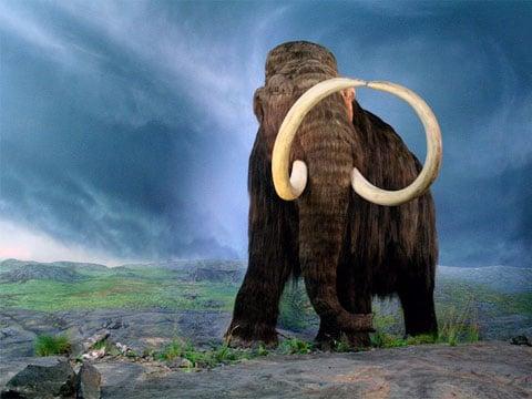 Před desítkami tisíci lety žili srstnatí mamuti na rozsáhlém území současně v různých částech světa, nejen na Sibiři