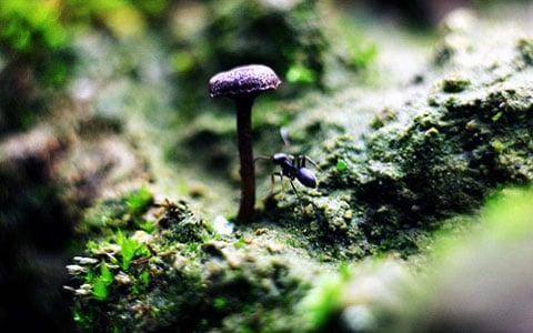 Pro vyjasnění chuťových preferencí bylo novým mravencům naservírováno 80 různých druhů hub. Hodně z nich bylo zavrženo, ale celkově Euprenolepis procera si velmi ochotně pochutnali na 30 druzích. Což je hodně: farmáři obvykle konzumují pouze jeden duh hřibů.