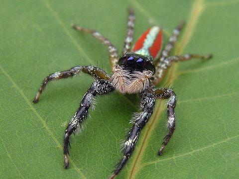 Skákavkovití (Salticidae) jsou čeledí pavouků, spadají do nadčeledi Salticoidea. Na světě je známo kolem 5000 druhů skákavek o délce těla 2 - 18mm. V ČR žije něco málo před 70 druhů, většina z nich má malé rozměry.