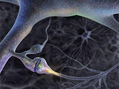 Skupina mozkových elektrických senzorů (dendrit) uvnitř neokortikální vrstvy
