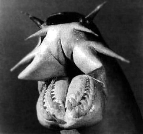 Sliznatka (Hagfish)