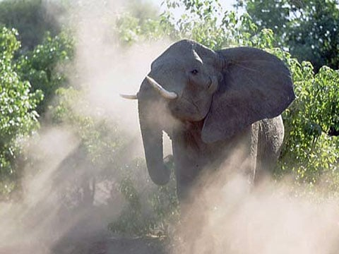 Sloni bez hranic