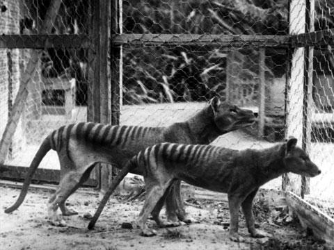 Jedenáct vyhynulých zvířat v fotografiích
