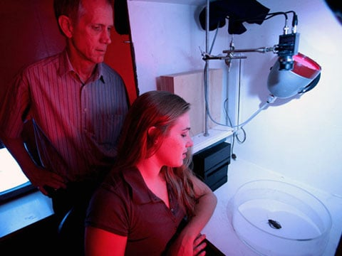Terry Page a jeho studentka Shannon McConnaughey mlčky projevují soucit s hladovějícím švábem