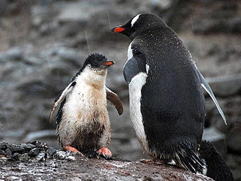 """V roce 2006 vědci navštívili ta místa, kde se v roce 2005 natáčel film """"Ptáci 2: Cesta na kraj světa"""",(La marche de l'empereur), který se proslavil po celém světě, a s údivem zjistili, že tento region zůstal téměř bez sněhu"""