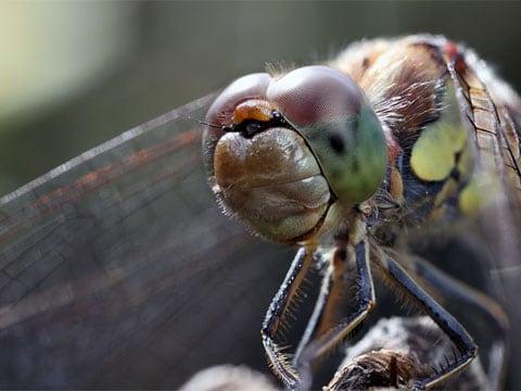 Vážky (Odonata) jsou řádem okřídleného velkého hmyzu s úzkým a velmi protáhlým tělem, který je v podstatě nezaměnitelný s druhem z jiného řádu. V hmyzím světě patří vážky mezi nejlepší letce a jsou hmyzem s nejdokonalejším zrakem.