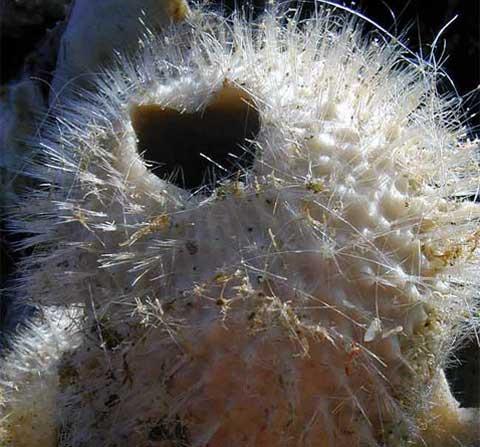 Ve Weddelově moři našli napřiklad tuto skleněnou rybu