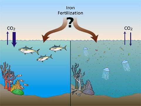 Výzkumníci budou zkoumat, zda železné zúrodňování umožní moři absorbovat více oxidu uhličitého, aniž by tím bylo poškozeno (vlevo) a nebo, zda přidávání železa nebude mít žádný přínos, ale naopak jen prohloubí a podpoří ostatní problémy v oceáně (vpravo).
