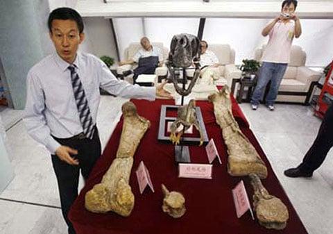 Xing Xu a to málo, co mu zbylo po gigantoraptorovi