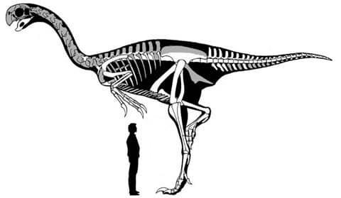Zatímco otázka, zda majitel ohromné siluety je jedním z prvních ptáků nebo ptákům podobný dinosaurus, je už vyřešena. Přesto fakt zůstává faktem: toto stvoření je největší pro vědu známých majitelů peří.