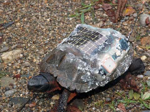 Biologové přeměnili kolonii želv na lokální síť