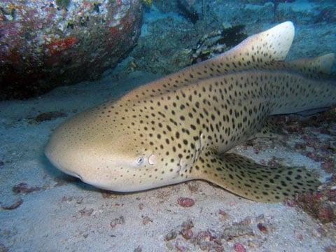 Žraloci jsou především mořští predátoři a obývají většinu rozlohy moří a oceánů. Někteří z nich se vyskytují i v brakických vodách při ústí řek a pronikají do jejich dolních toků, vyskytlo se i několik málo druhů, které se adaptovaly na život ve větších sladkých jezerech.